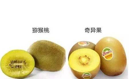 猕猴桃和奇异果有什么区别